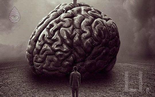 Mind Meld 51 | Neuroscientist Dr. Andrew Hill Hacks Brains